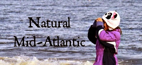 Natural Mid-Atlantic