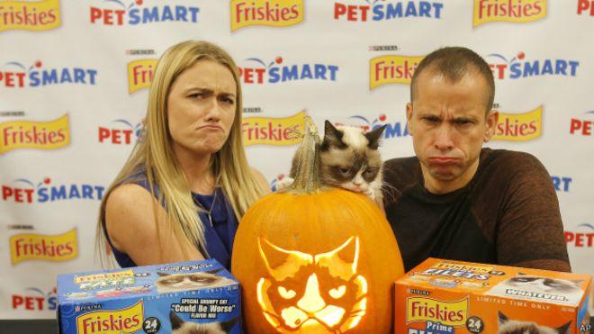 """O sucesso da """"Gata emburrada"""" rendeu acordos comerciais como o lançamento de uma linha especial de ração felina"""