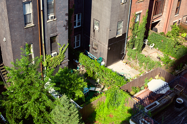 nyc backyard