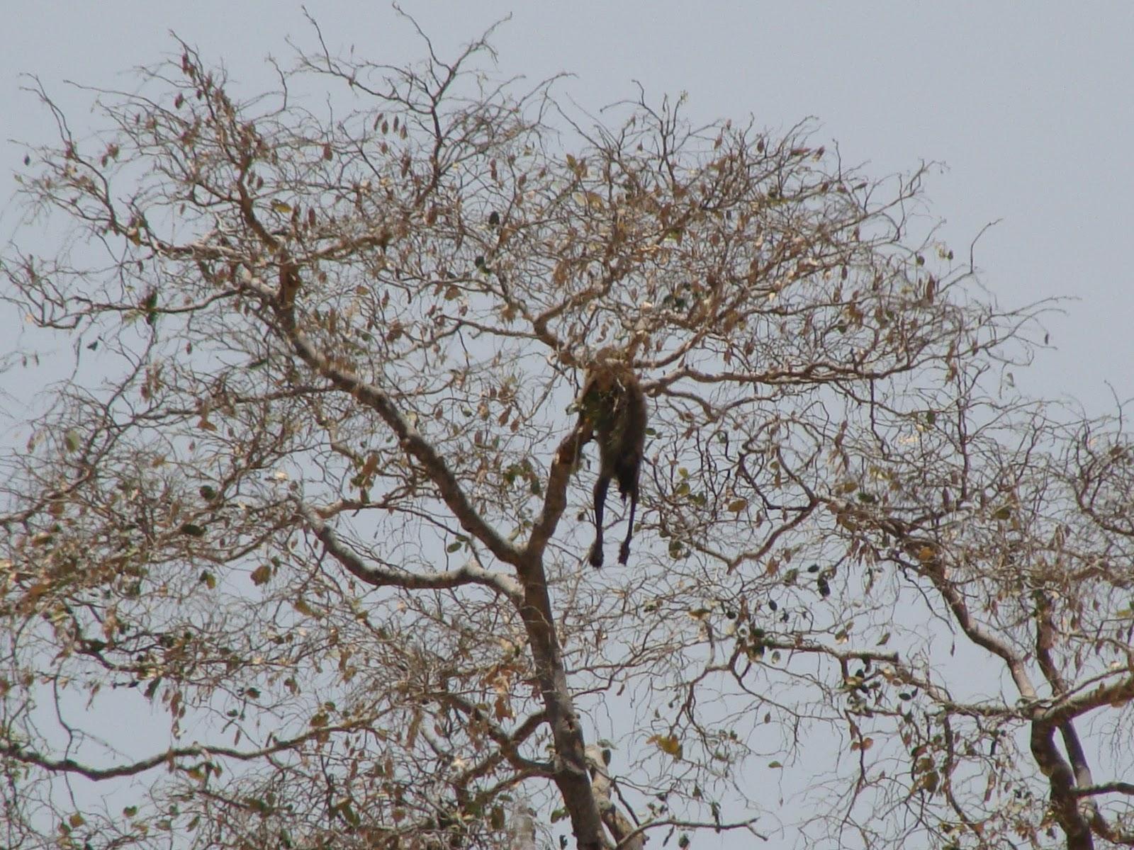 Wildness Safari Tanzania - Selous