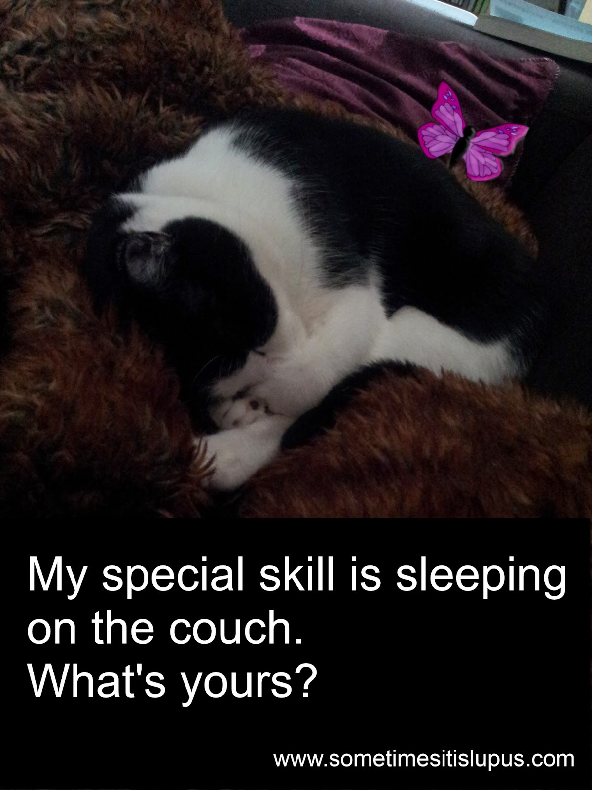 Image: sleeping cat. Text: My special skill is sleeping on the couch. What's yours?