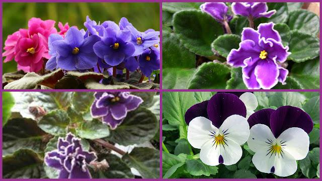 violeta-belanaselfie-f