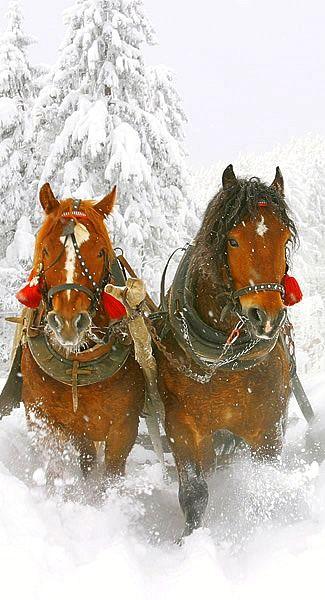 Orange sink sleigh bells ring