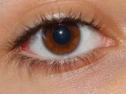 Senam mata solusi menghindari mata lelah