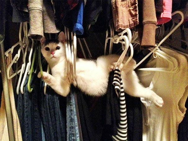 Hilárias fotos de gatos se metendo em todo tipo de problema