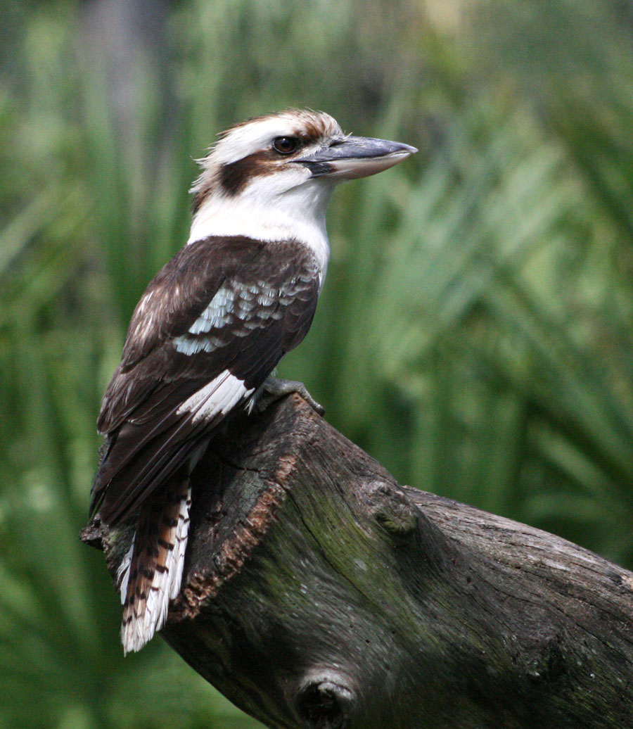 Australian rainforest birds pictures The Best Pictures Collection About Hairstyles and Fashion