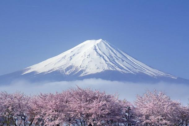 SAKURA Mt.Fuji