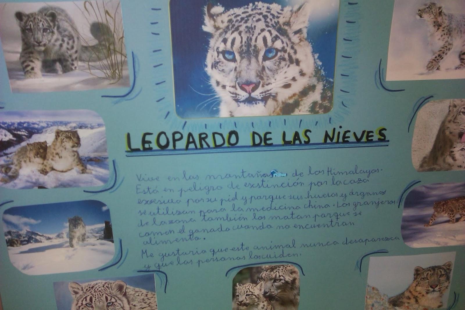ANIMALES EN PELIGRO DE EXTINCIÓN | ARGONAUTAS
