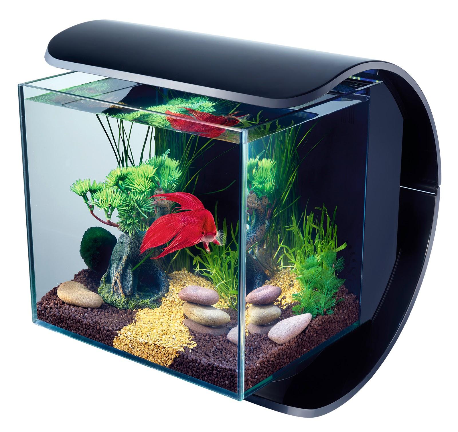 Luxus aquarium pour poisson rouge id es de conception de for Aquarium poisson rouge petit