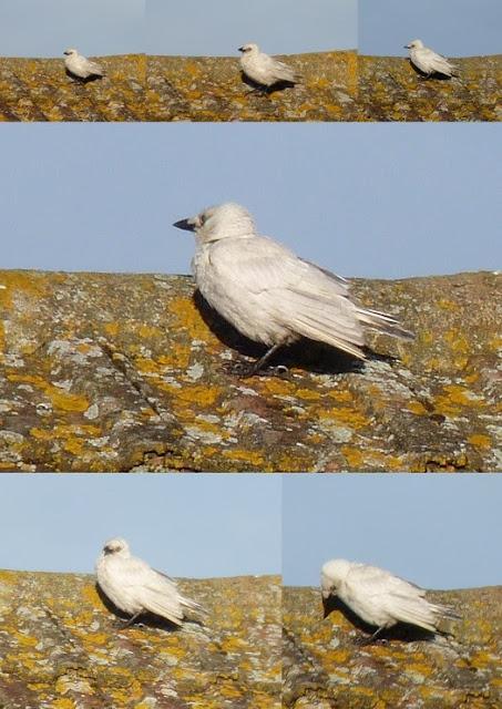Whoopidooings: Silver Crow