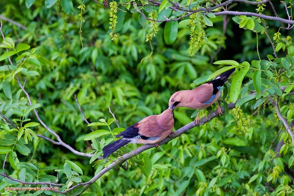 Ảnh thiên nhiên: Chú chim nhỏ 7