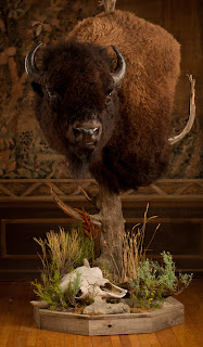N400 Mailing Address >> Taxidermy by Josh Hunt: Bison and Moose