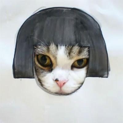 Эти коты -- звёзды интернета