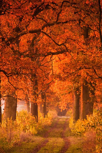 My Favorite Part, The Crisp Days And The Smells. Divine. Autumn.