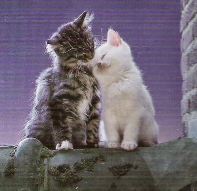 aujourd\u0027hui, c\u0027est la Saint,Valentin et à cet occasion, j\u0027ai envie de vous  faire partager ces jolies photos de chats qui se font un câlin comme des  amoureux