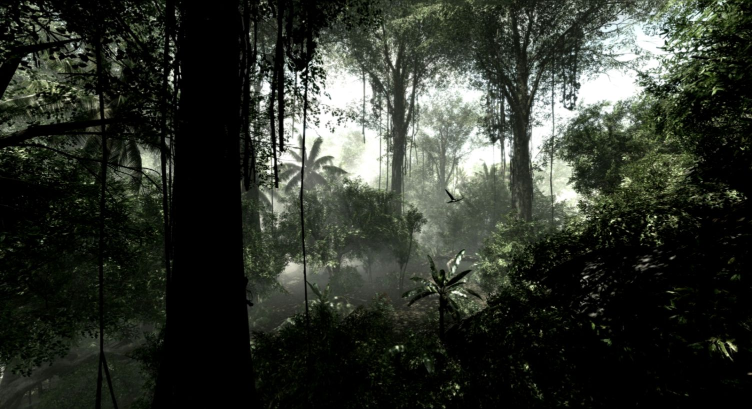 Jungle Background Wallpapers  WIN10 THEMES