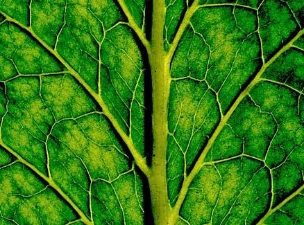 Ruang Lingkup Dan Peran Botani