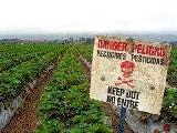 http://lokalnazywnosc.pl/blog/ktore-warzywa-i-owoce-warto-kupowac-ekologiczne