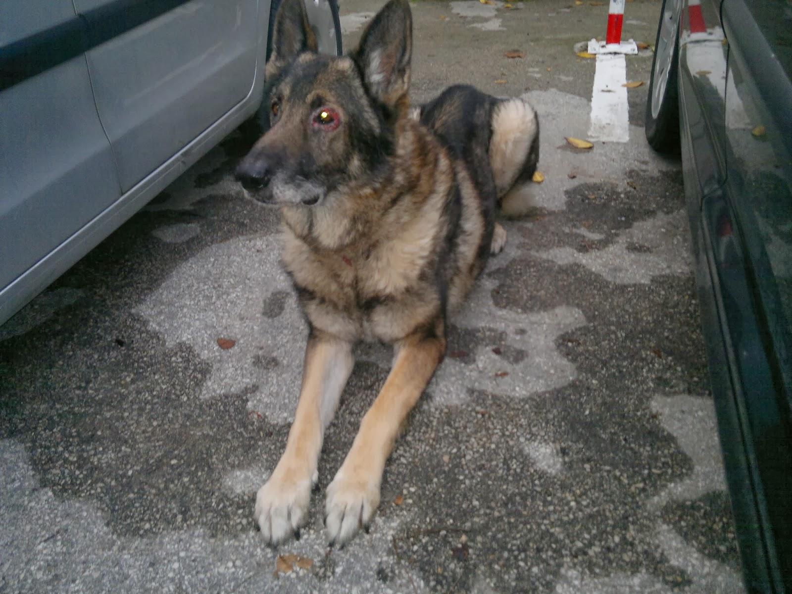 Hunde aus zentral portugal adoptieren ausgemusterter