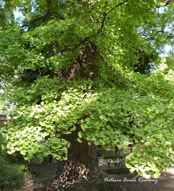 Periodo jur sico caracter sticas del periodo jur sico for Caracteristicas de un jardin botanico