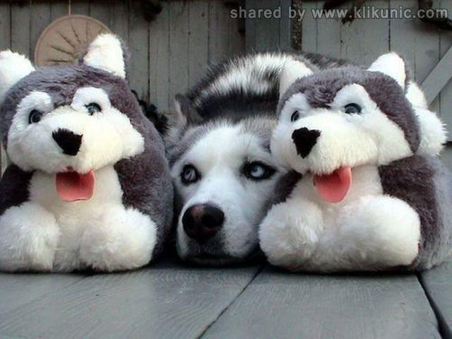 http://3.bp.blogspot.com/-05NMwy1lDm0/TXhNjKwULjI/AAAAAAAAQjA/5T1uVB_kHRI/s1600/these_funny_animals_635_640_04.jpg