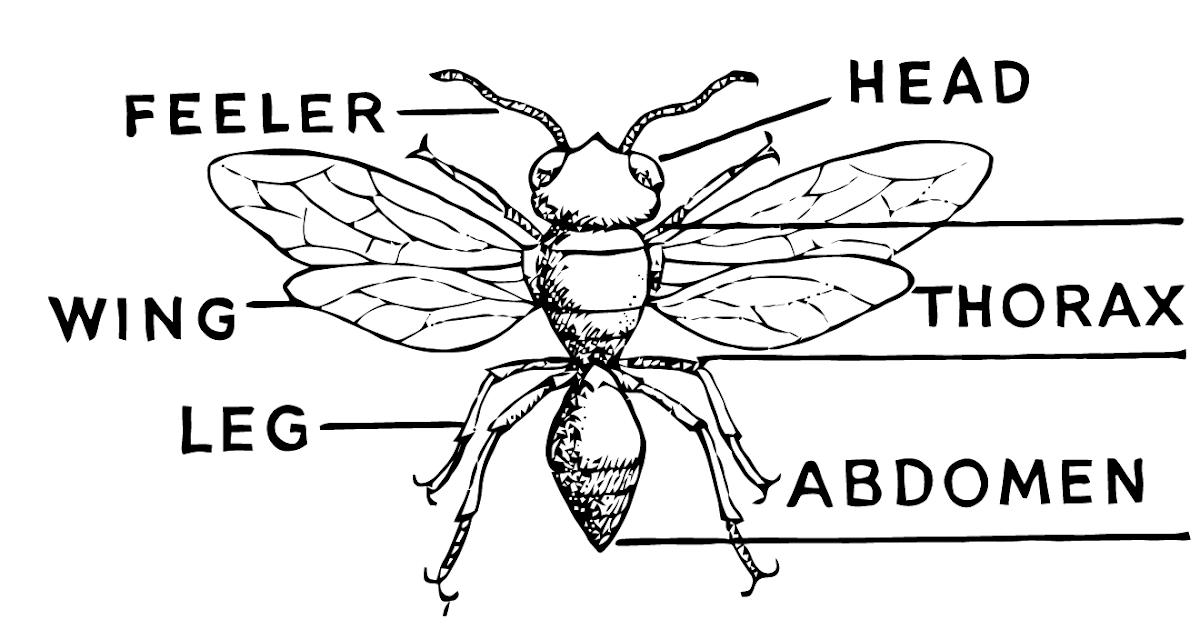 insect diagram | Diarra