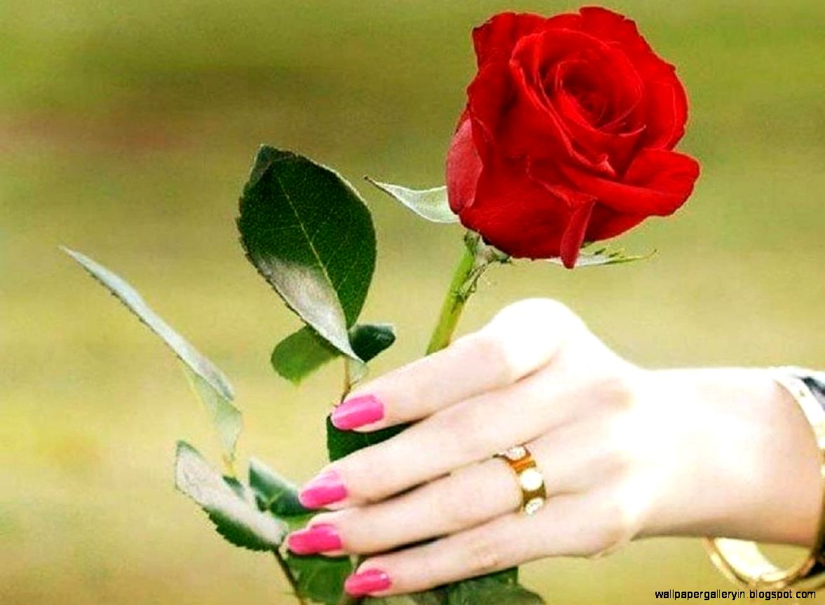 roses flower in hand love hd wallpaper wallpaper gallery