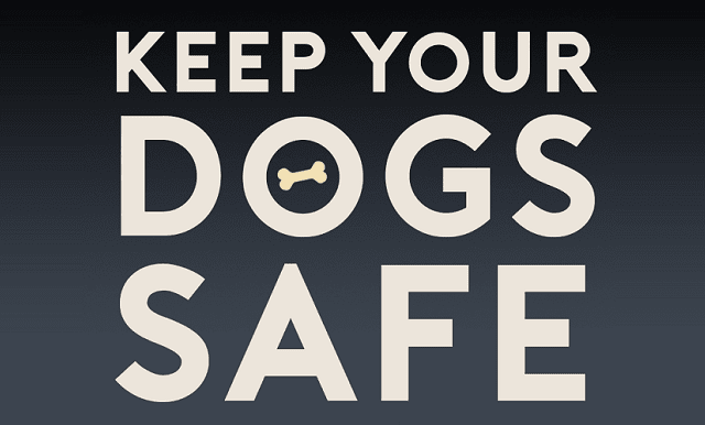 Keeping Your Dog Safe and Happy This Bonfire Night