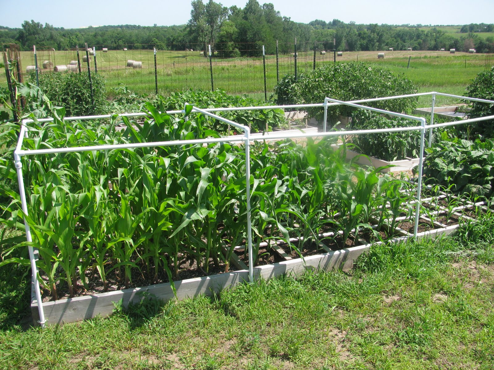 The Harried Homemaker Preps: This Is Why Iu0027m A Square Foot Gardening  Evangelist!
