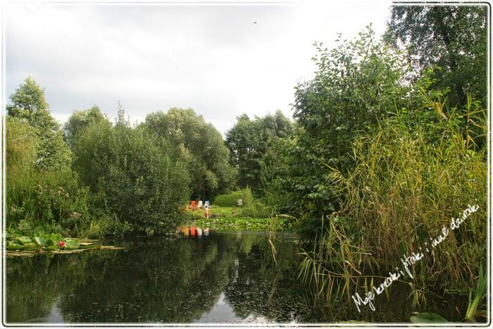 lilie wodne, water lilias, staw,, mallard duck, lake, rośliny wodne