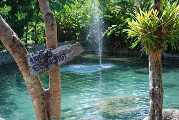 ธารน้ำร้อนบ่อคลึง ห่างจากลันดาออร์คิด เพียง 300 เมตร