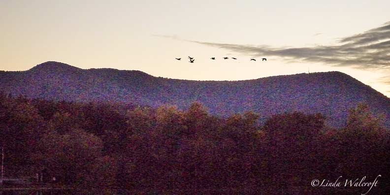 birds flying over mountains