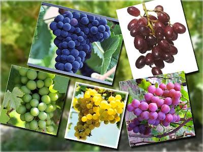 anggur jenis - Macam Macam Jenis Buah Pear