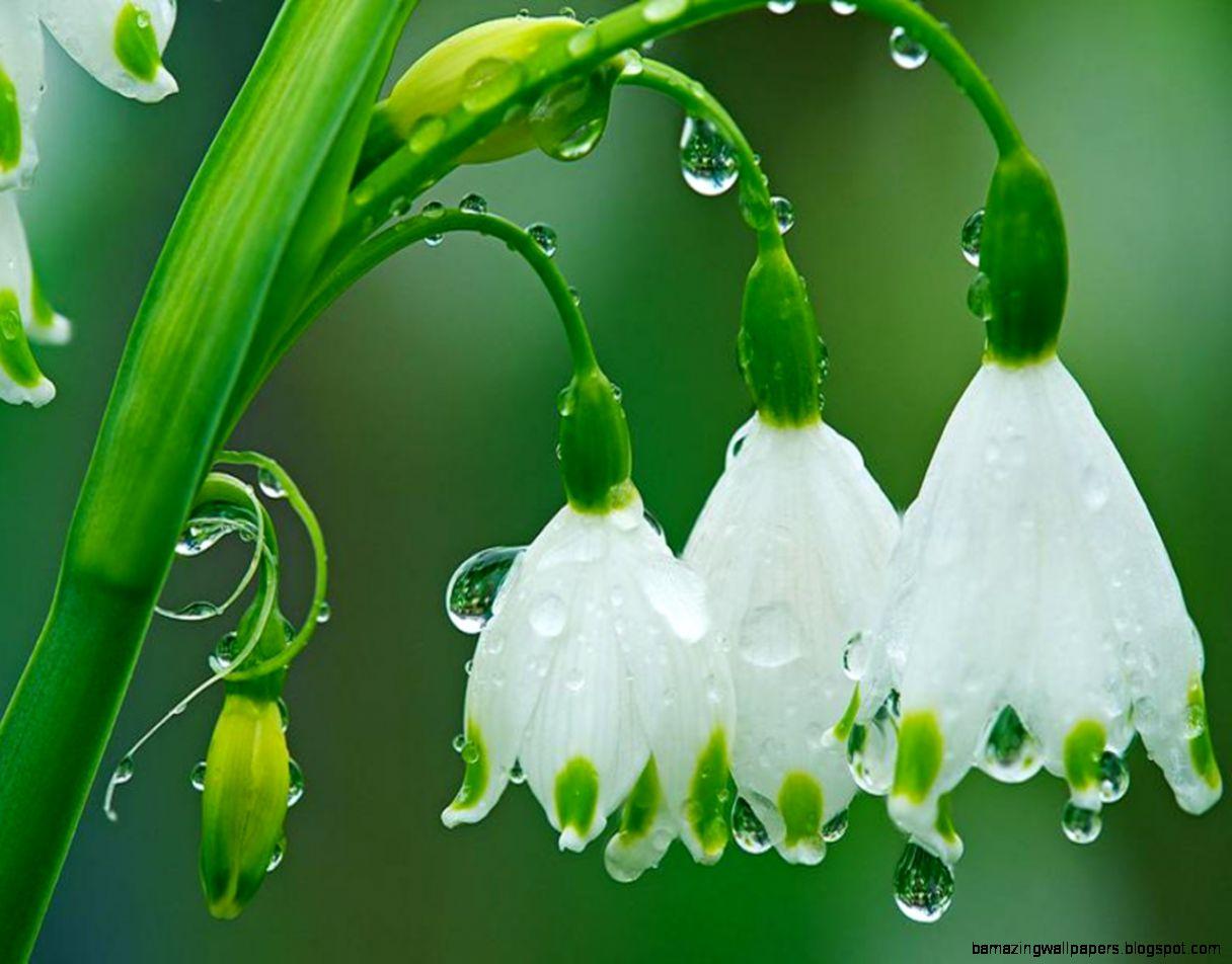 Spring Rainy Wallpapers   WallpaperSafari