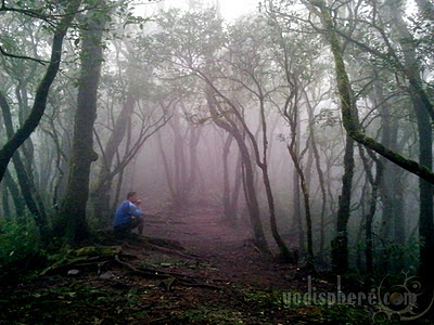 Solitary man at Mt. Cristobal under the Forest Fog