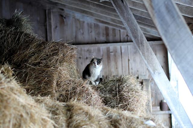 Molly's hay hay