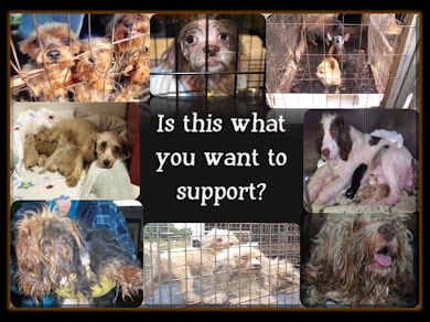 NEWPORT BEACH - IS THIS WHAT YOU WANT TO SUPPORT? - RUSSO'S - I HEART PUPPIES