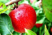 apel,Buah Pencegah Penyakit Stroke,Buah Pencegah kolesterol tinggi,Buah Pencegah hipertensi,Buah Pencegah penyakit jantung