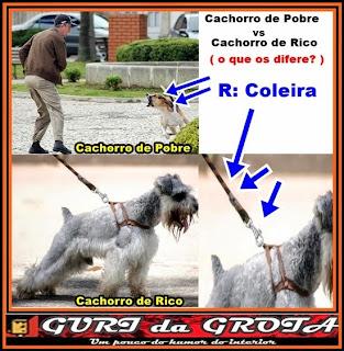 cachorro de rico,cachorro de pobre