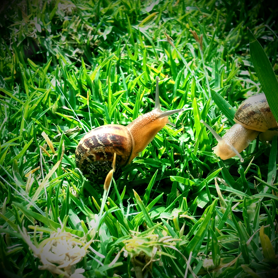 how to know if a earth snail is dead