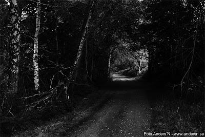 skogsväg, mörk skog, väg, forest, woods, dark, road, foto anders n, tsyfpl