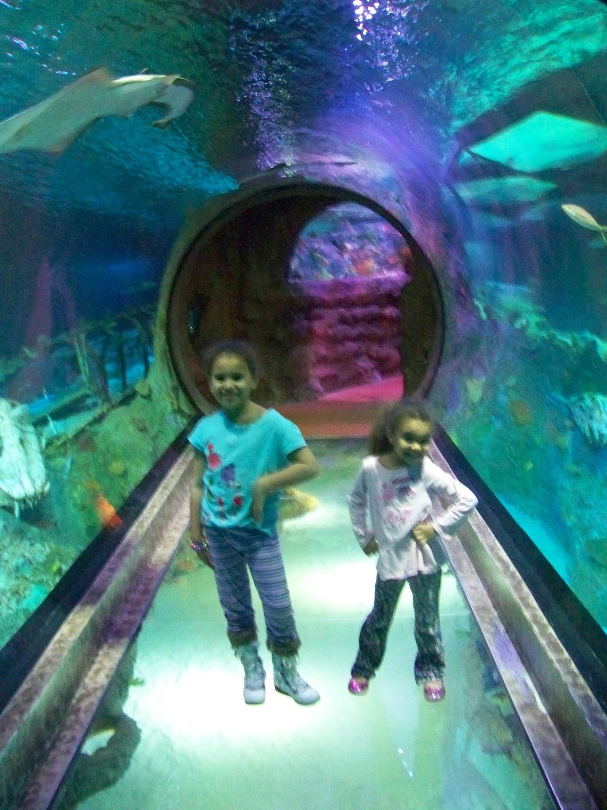 Family Entertainment In North Texas Sea Life Aquarium In Grapevine Tx