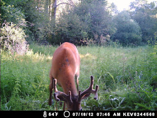 Trail Camera Pic