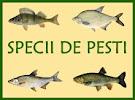 specii de pesti