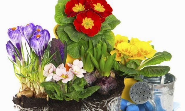 Casa bricolage decora o e artesanato jardinagem for Plantas de exterior para macetas