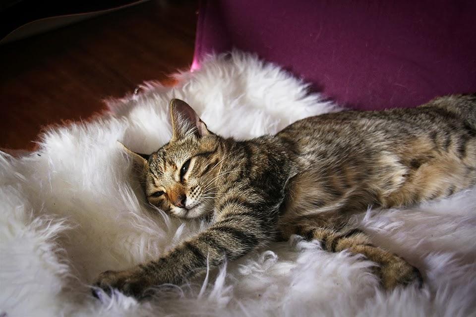 l na ou comment je suis devenue une blogueuse chat. Black Bedroom Furniture Sets. Home Design Ideas