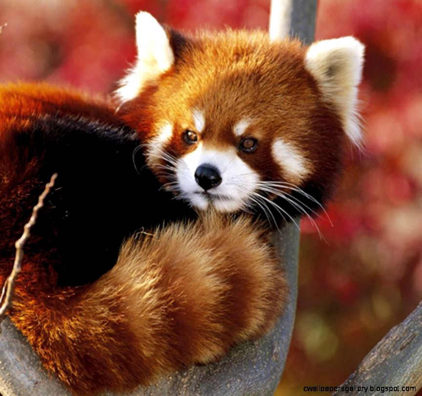 Cute Rare Animals  Best Animals Galleries