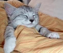 Gambar Kucing Tidur 5
