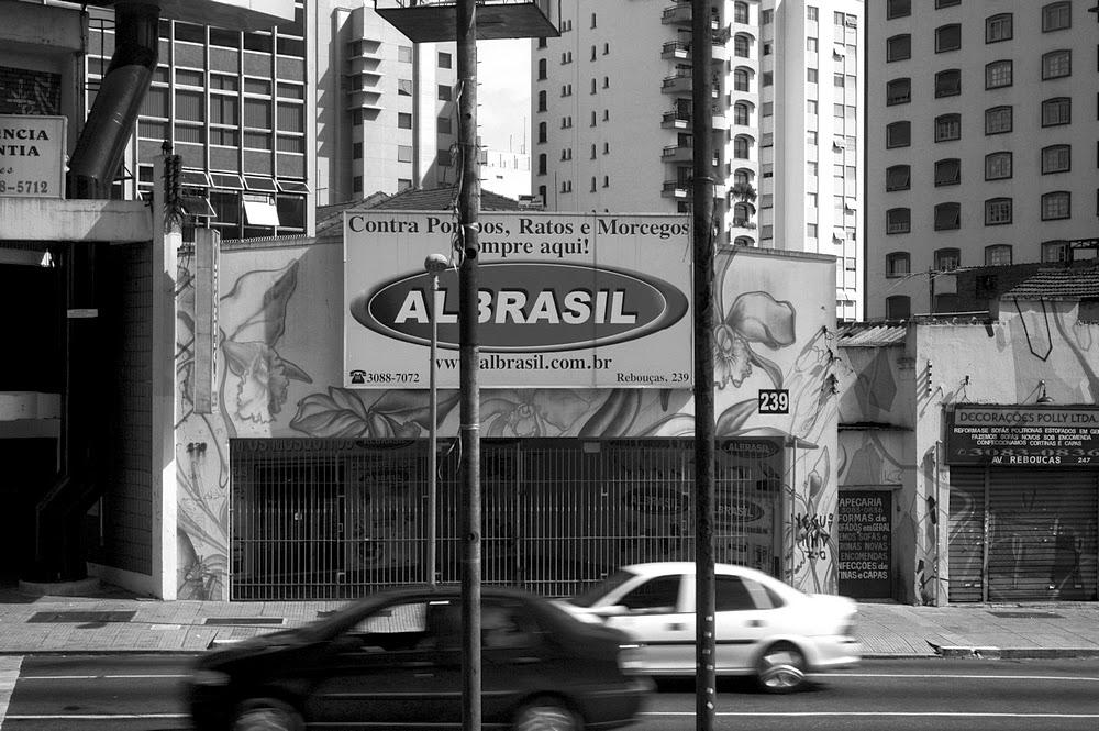 São Paulo - ratos e morcegos