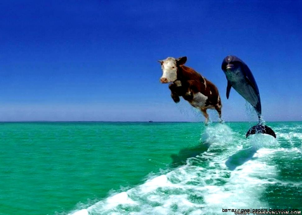 cow and dolphin fake comedy